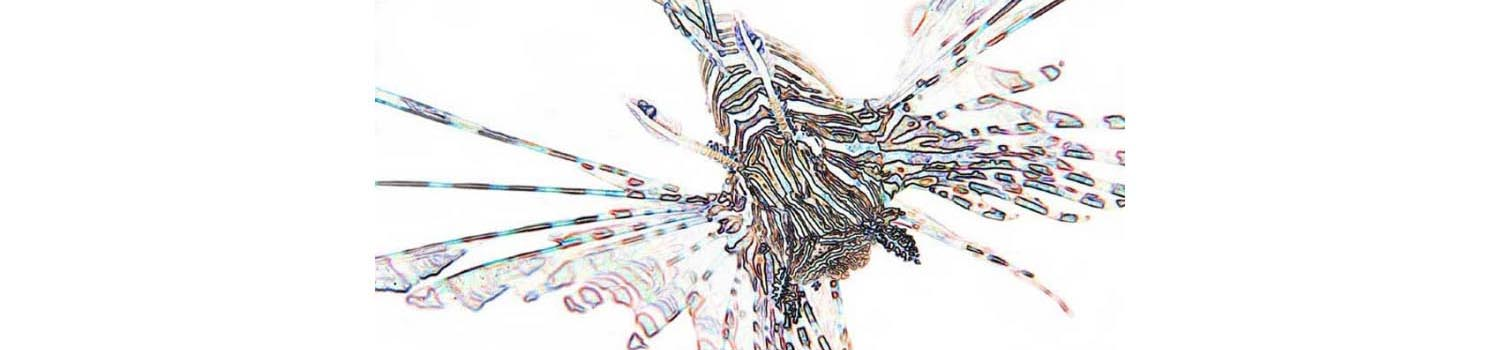 adamaqua.com lionfish abstract artistic
